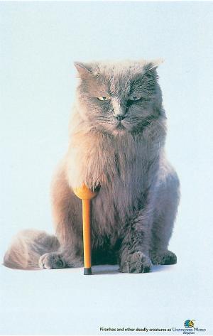 Katt-med-träben
